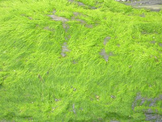 Very bright green is naturally occuring
