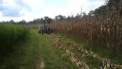 Movie: Second corn (8.1M)