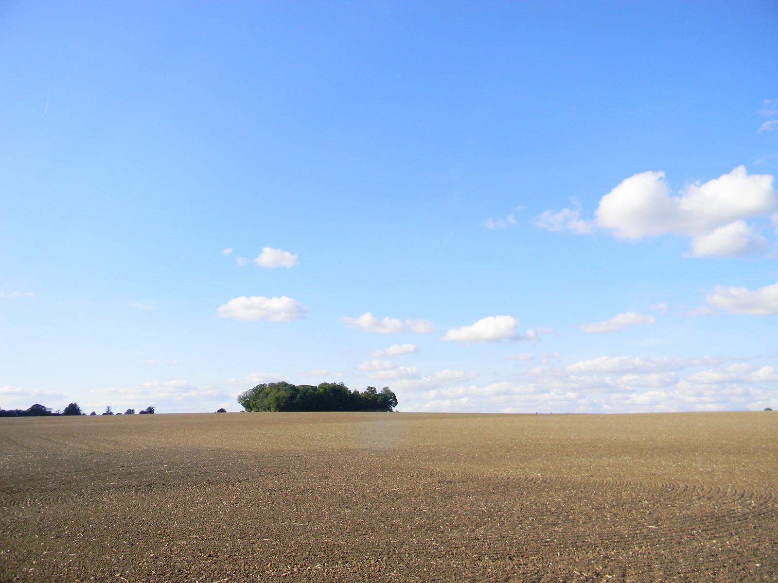 Copse in big field Roydon to Sawbridgeworth