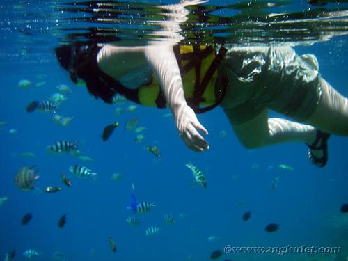 Snorkeling in Simizu Island, El Nido, Palawan