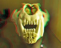 Lion Skull NHM 3D