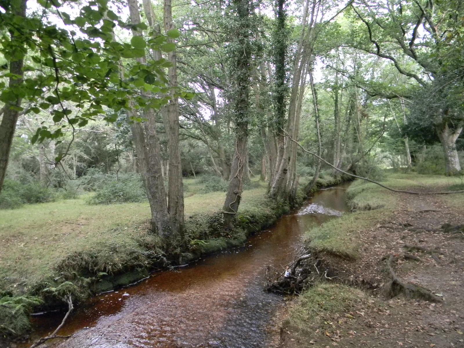 Trees and stream Brockenhurst Circular