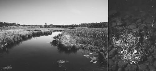 blackandwhite bw lake ontario canada fall river season landscape nikon angle natural zoom outdoor wide frogs sudbury fullframe nikkor fx 2012 forfun 2485mm kellylake robinsonlake d700 southviewdrive