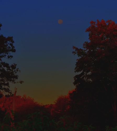 park autumn trees color fall sunrise nikon state farm harvest fullmoon groton d5000 farmconnecticut parkshaley moonoctober2012connecticutnew englandsoutheasternstate parkhaley