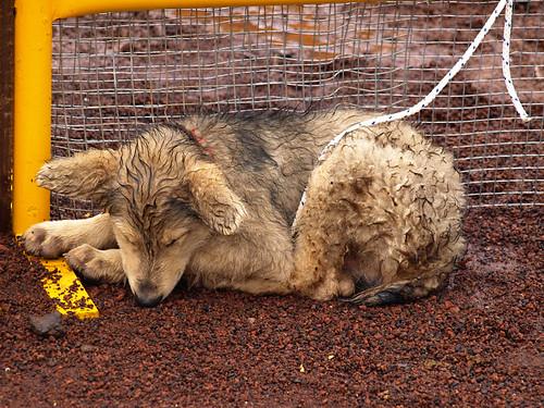 Wet Dog, Tenerife