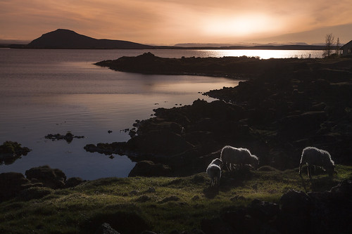 sunset lake is iceland sheep north myvatn christianwilt