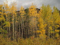 208 Red Cliffs by Rail 9/24-30/12
