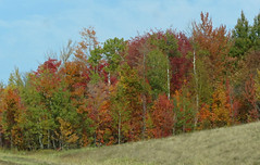 fall color 3.jpg
