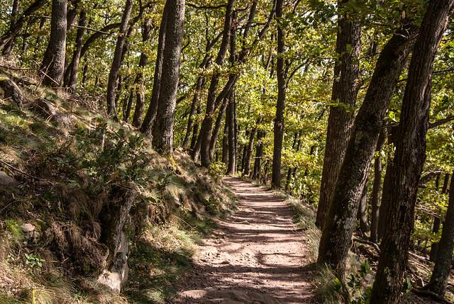 Weg zum Hambacher Schloss