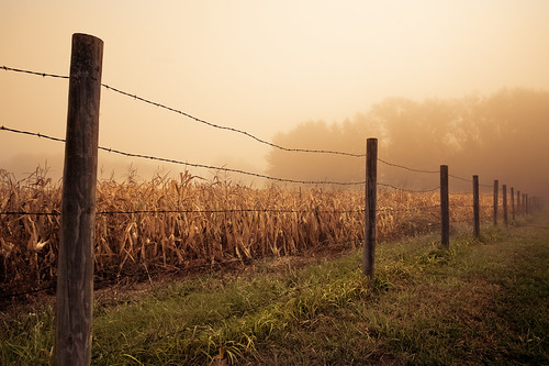 morning autumn usa fall nature field grass lines fog wisconsin brooklyn rural fence landscape photography photo corn october midwest post image farm country perspective picture explore barbedwire northamerica rutland canonef1740mmf4lusm 2012 canoneos5d flickrexplore danecounty lorenzemlicka