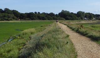 Hamble marshes