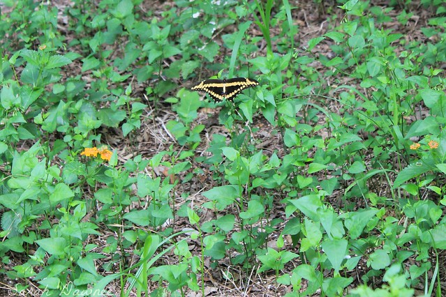 Butterfly friend2