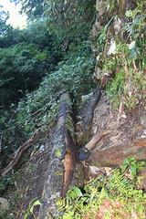 登山道上の倒木