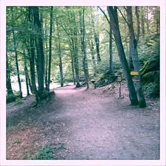 day 24: path.