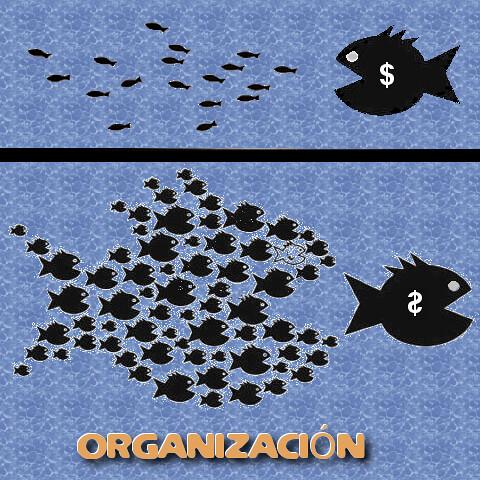 Organización!