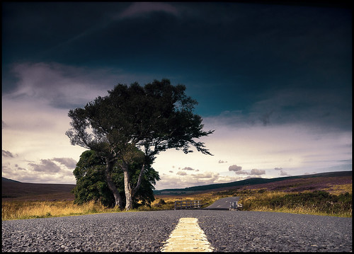 trees ireland landscape sigma adobe wicklow militaryroad r759 nikond5000 o115124 1020two