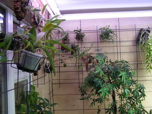 Warm greenhouse