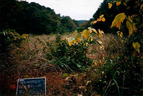 町田市由地方組成協會,管理被劃為保育區的土地。