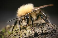 Bee Poser