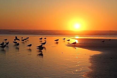 ocean sunset water birds sand pacificocean 366