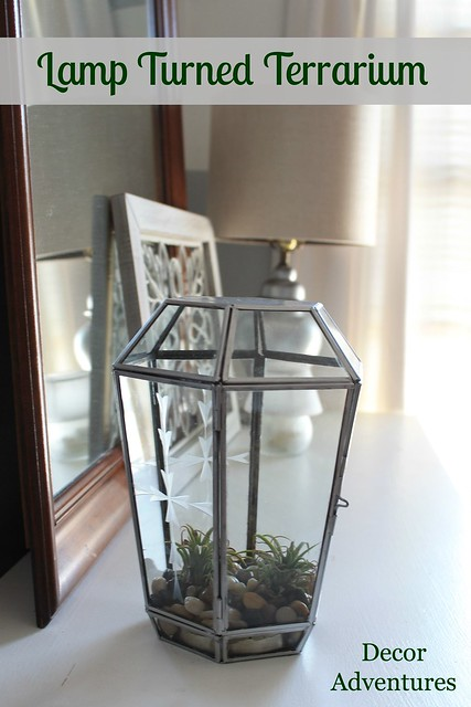 Lamp Turned Terrarium