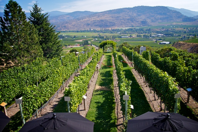 Osoyoos Wine Tours