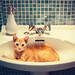 Cat in the sink
