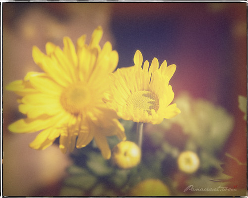 yellow vintage flower