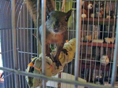 Pet Squirrel Cage Plans