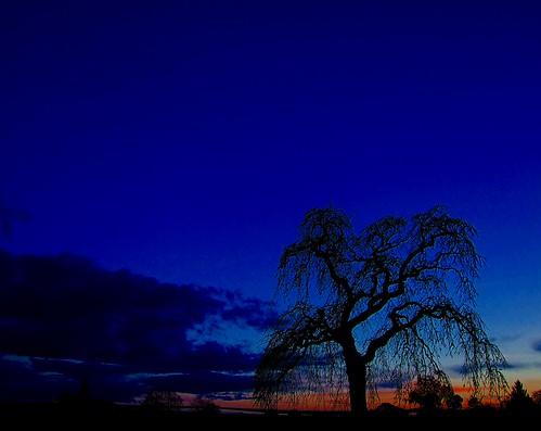 newzealand nature night lowlight scenery dusk s masterton day263 s100fs 3652012 365the2012edition 19092012 monthlythemesept