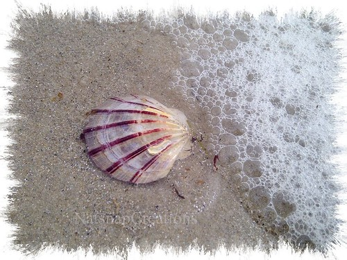 She sees sea shells by the sea shore!
