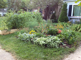The perennials in the front yard, September