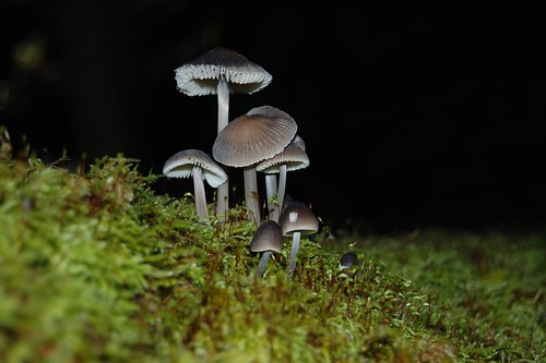 We called them 'fairy fungi'