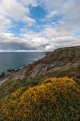 Treligga coast walk