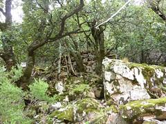 Avant le Valdu Grande : murets de soutènement d'une aire de charbonnière (carbunara)