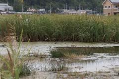 南浜町の真ん中に出現した池