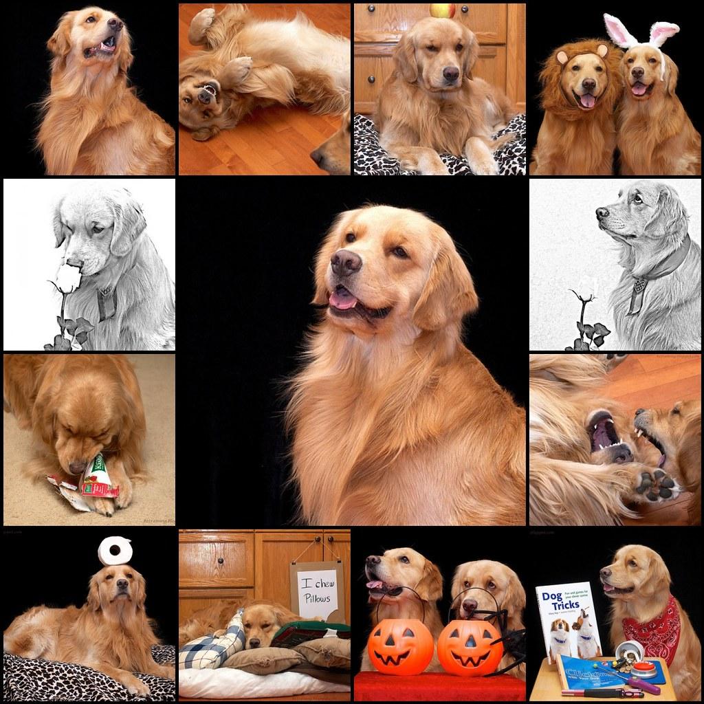 The Precious Puppy
