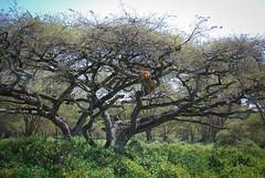 2012 Kenya (289 of 170)