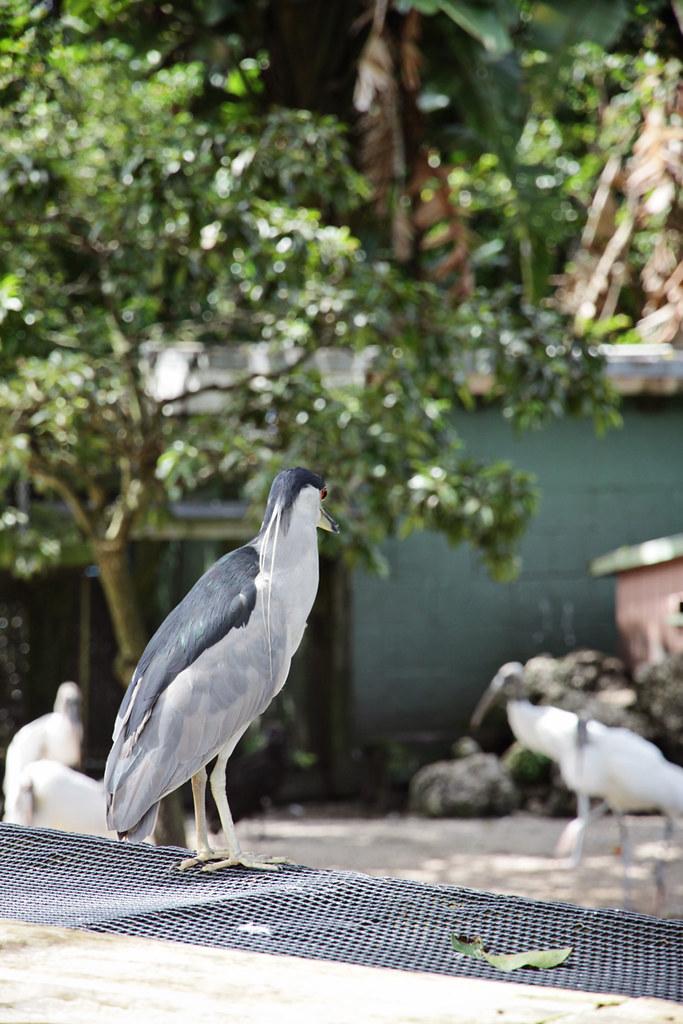 Flamingo Gardens 36