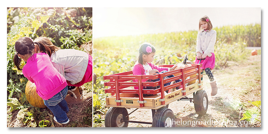 Bright Sun Pumpkin Picking COLLAGE