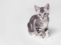 [フリー画像素材] 動物 1, 猫・ネコ, 子猫・小猫 ID:201210101000