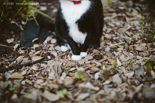 Rambo the Cat by twoguineapigs Pet Photography [5]