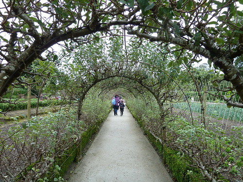 Apple Tree Avenue, Heligan