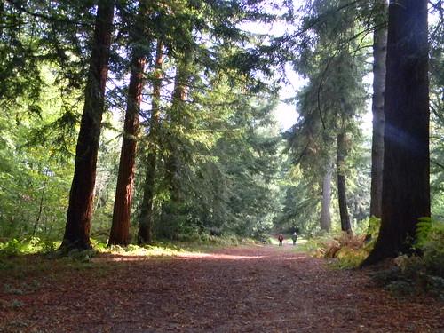 Through Redwoods, Nymans
