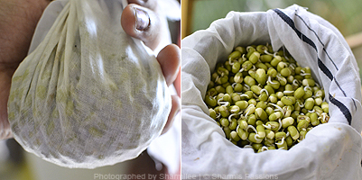 Homemade Sprouts Recipe - Step1