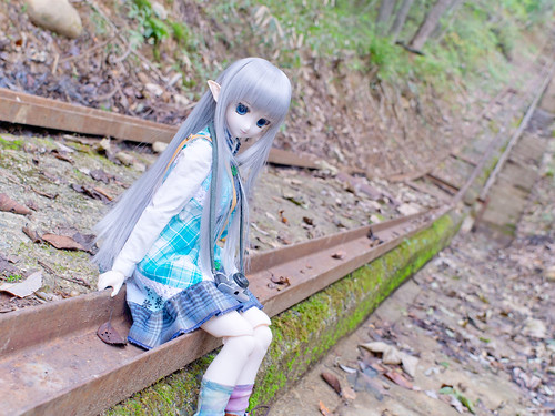 Rail of forest