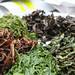 Tasting our teas at Jun Chiyabari