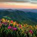 Grassy Ridge Sunset, Roan Mountain, North Carolina by jason_frye