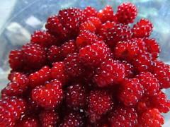 tayberry, berry, frutti di bosco, produce, loganberry, fruit, food, raspberry, boysenberry,