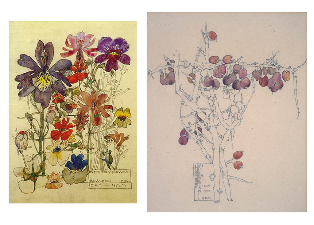 floral watercolors by mackintosh